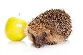Hedgehog with an apple. hedgehog isolated. — Stock Photo