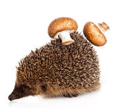 Hedgehog on a white background. Hedgehog with mushroom — Stock Photo