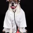 American Bulldog. dog dressed in a doctor coat and wearing a ste — Φωτογραφία Αρχείου #29905441