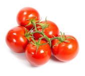 Closeup of tomatoes on the vine isolated on white. Tomato branch — Stock Photo