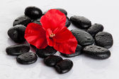 Spa stones and red flower isolated on white. aromatherapy con — Stock Photo