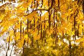 Bella autunno — Foto Stock