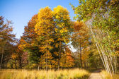 Autumn Landscape. Forest in Autumn. Colorful autumn — Stock Photo