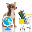 Dog with pencil and globe — Stock Photo