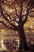 Autunno landscape.nature colorato sfondo — Foto Stock