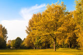 Landscape with autumn forest. — Stock Photo