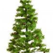 Stock Photo: Christmas tree isolated.