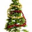 Christmas tree isolated. — Stock Photo #30554099