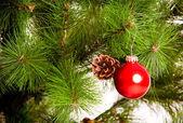 Buon Natale — Foto Stock