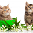 Stock Photo: Kittens in green gift box isolated on white.