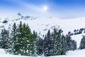 Beautiful winter landscape — Stock Photo