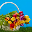Basket with colorful tulips. — Stock Photo #32930125