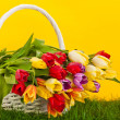 Basket with colorful tulips. — Stock Photo #32930131