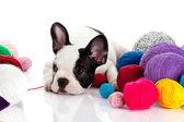 Franse bulldog puppy met een wol ballen geïsoleerd op wit — Stockfoto