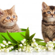 Kittens in gift box — Stock Photo