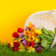 Basket with colorful tulips.  — Stock Photo