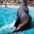 Sea Lion. — Stock Photo