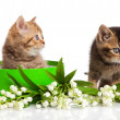 Kittens in green gift box isolated on white. — Stock Photo