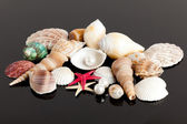 The exotic sea shell — Stock Photo