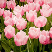 Colorful tulips. — Stock Photo