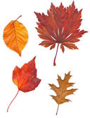 Collection beautiful colorful autumn leaves isolated — Stock Photo