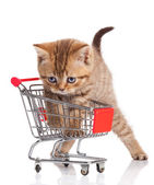 British cat with shopping cart isolated on white. — Stockfoto