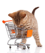 British cat with shopping cart isolated on white. — Stock Photo