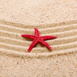 Sea star on the sand of beach — Stock Photo