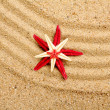 Sea star on the sand of beach — Stok fotoğraf