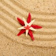 Sea star on the sand of beach — Foto de Stock