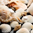 Sea shell  on black background — Stock Photo