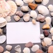 Sea shell and white card on black background. — Stock Photo