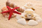 Pearl on the seashell — Stock Photo