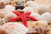 Sea star on the sand of beach — Stock Photo