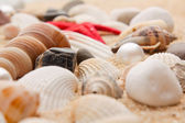 Close-up pearl and seashell — Stock Photo