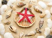 Beach with starfish and seashells — Stock Photo
