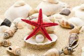 Sea pearl in shells — Stock Photo