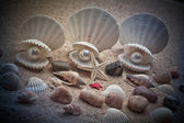 Sea pearl in shells on sand — Stock Photo