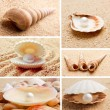Collection of seashells. — Stock Photo