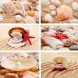 Collage of summer seashells — Stock fotografie