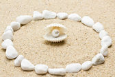 Pearl on the seashell — Stock Photo