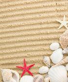 Treasure from the sea — Stock Photo