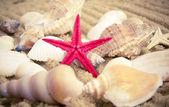 The exotic sea shell — Stock Photo