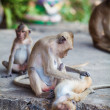 Monkey. — Stock Photo #37667327