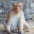Monkey. — Stock Photo