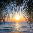 Beautiful tropical sunset with palm trees. Tropical beach. palm — Stock Photo #37786615