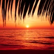 Palm trees silhouette on sunset tropical beach. Tropical sunset — Stockfoto #37786689