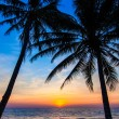 Beautiful tropical sunset with palm trees. Tropical beach. palm — Stock Photo #37786747