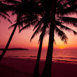 Palm trees silhouette on sunset tropical beach. Tropical sunset — Stockfoto #37786779