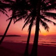 Palm trees silhouette on sunset tropical beach. Tropical sunset — Stock fotografie #37786779
